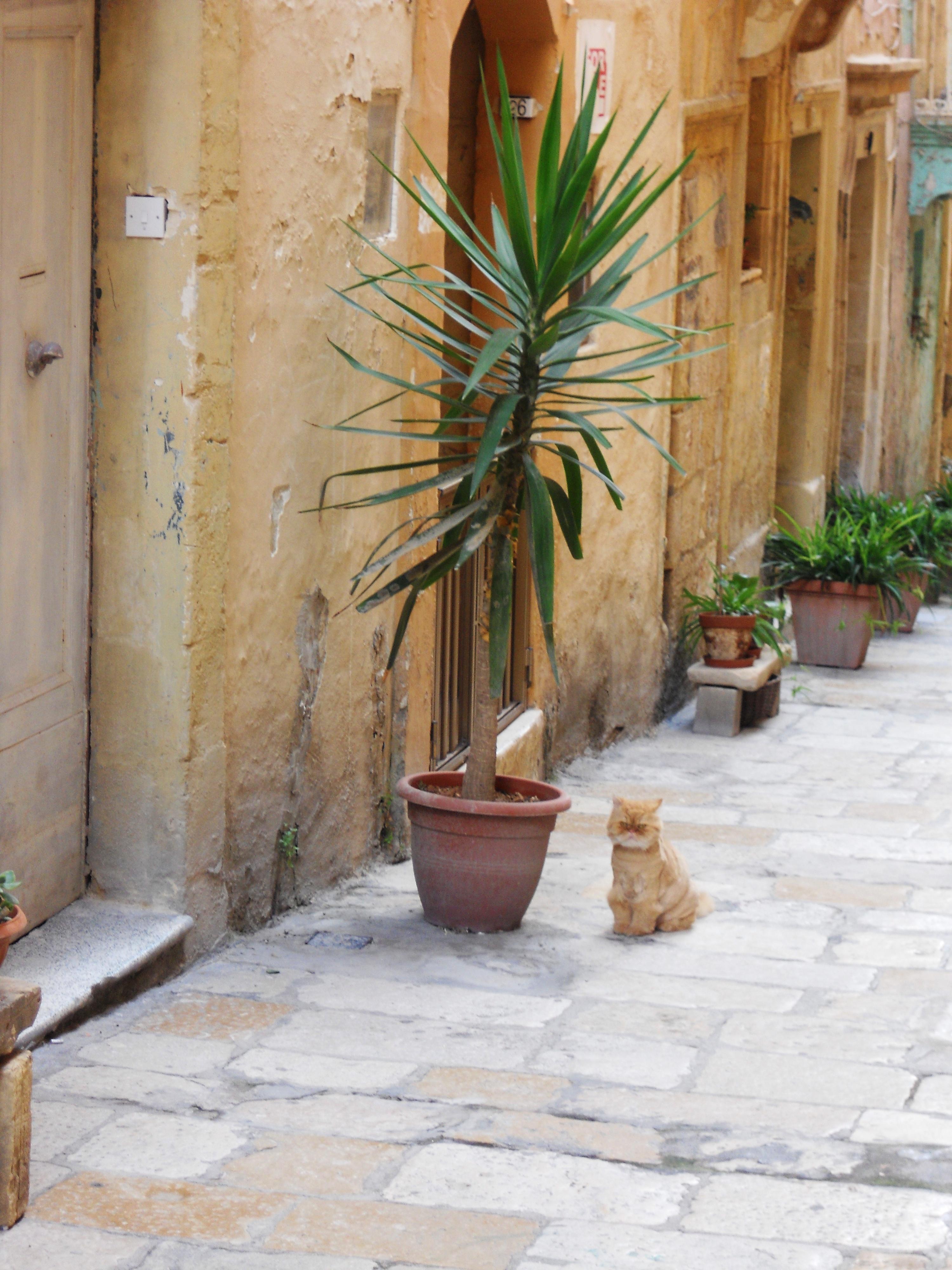 Malte Chat persan à Birgu Quelques photos de ma retraite au soleil à Malte
