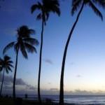 ma retraite au soleil palmiers 150x150 Retraite au soleil : choisir sa destination